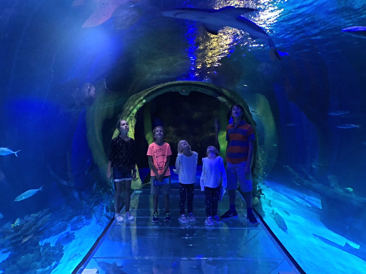 Sea Life Aquarium and ICON Orlando: From the Sea to the ...